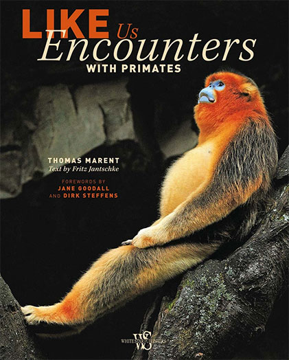 Like Us: Encounters with Primates